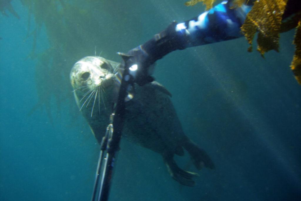 harpun til undervandsjagt